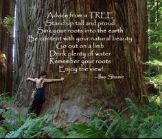 ➳➳➳☮ American Hippie Quotes ~ Advice from a tree