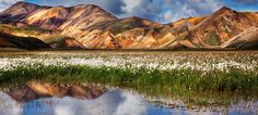 """Cotton Grass - Cotton grass at <a href=""""http://icelandaurora.com/tours/landmannalaugar/"""">Landmannalaugar .</a> early August.  A lovely August morning.  So pure and fresh, Hmmm...  Forced onto my sensor with magic cloth long exposure. Use the <a href=""""http://icelandaurora.com/blog/category/magic-cloth-technique/"""">Magic Cloth Technique.</a>"""