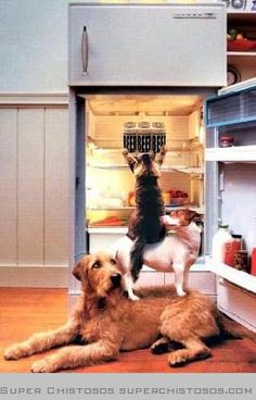 Dogs and cats team up to accomplish the tricky task of stealing a birthday cake out of the refirgerator in this funny pet picture. Teamwork photos with dogs and cats. Funny Animal Pictures, Dog Pictures, Funny Animals, Cute Animals, Funny Pets, Smart Animals, Animal Funnies, Photos With Dog, 4 Photos