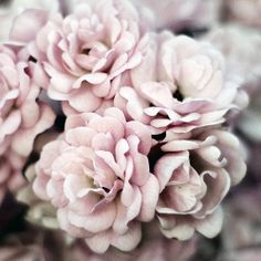 Beautiful, delicate colour