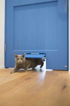 Diy Doggie Door, Pet Door, Cat Litter Cabinet, Feral Cat House, Diy Cat Tree, Living With Cats, Cat Playground, Cat Room, Cat Furniture