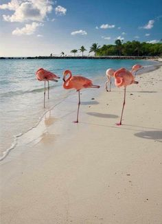 Beach With Pink Flamingos .Caribbean Beach With Pink Flamingos . Places To Travel, Places To See, Travel Destinations, Belle Photo, Beautiful Beaches, Beautiful World, Wonders Of The World, Travel Inspiration, Caribbean
