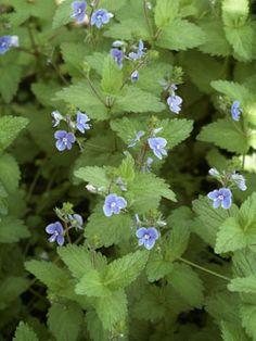 Vegetable Garden, Garden Plants, Health And Nutrition, Botany, Planting Flowers, Herbalism, Vegetables, Gardening, Nature