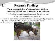 images of dogs in over crowded shelters - Google Search