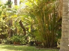 tropical gardens......