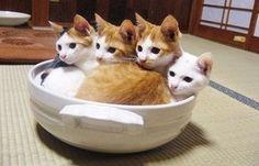 ¿desea una taza de gato? :3
