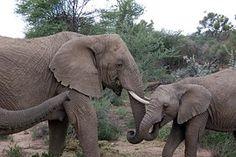 Namibie, Éléphant, Safari, Des Animaux