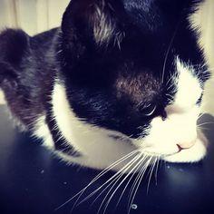 . . . . てんちゃん オスなんだけどメスっぽい。 そしてのあくん髪切ったはいいけど よく見たら大五郎ってより ウドちゃんだった 心なしか顔も似てる…👶 毎日じょりじょり部分に 顔をスリスリ…♥ 猫関係ない話⏫ てんちゃんにも顔をモフモフ…♥笑 . . . #白黒猫 #猫 #🐱 #愛猫 #オス