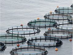 Government Works with BC Salmon Farmers to Implement Leading International Standards  For more details: http://www.agribazaar.co/index.php?page=item&id=2053