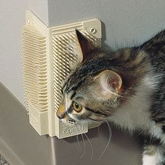 """Cat-A-Comb"" wall mounted self-grooming cat brush...just add catnip."