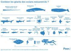 INFOGRAPHIE. Quelle est la taille réelle des géants marins ?