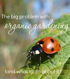 Bad bugs are the nemesis of organic gardening. Thankfully, there are safe, effective methods of controlling them, without chemicals! Here's how.