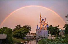 Walt Disney World, Disney World Ticket Prices, Disney Parks Blog, Disney World Vacation, Disney World Resorts, Disney Vacations, Disney Trips, Disney Family, Discovery Island