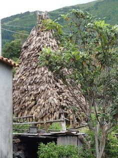 Drying Corn rack in the Azores. Learn the Portuguese Culture.  http://www.marialanguages.com/media/learnportuguese.shtml