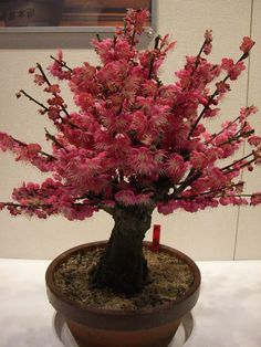 Lovely Bonsai.... #Relax more with healing sounds: