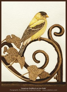 """American Goldfinch on Iron Gate"" Burned on watercolor paper with color accents."