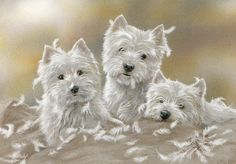 westie images to print - Google Search