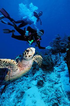 Best scuba diving experience of my life! An extensive reef system makes Turks and Caicos a popular dive destination.