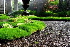 ogród w trakcie zraszania