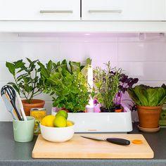 Kasvata vihreää  – luo yrttitarha keittiöön
