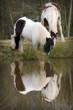 Horses Playing In The Pond gypsy vanners Красивые Лошади, Милые Животные, None, Фотографии Животных, Лошадиная Грива, Цыганская Лошадь, Лошадь Видео, Любовь Лошадей, Фильм Прекрасные Создания