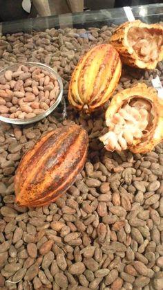カカオ豆カカオ豆は、収穫した時は殻に入って白い綿みたいな組織に包まれています。 これを取り出して、発酵させて天日に干すと出来上がり。