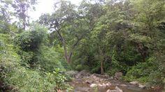 800.000 personas intentan plantar 50 millones de árboles para romper el Récord Guinness - http://www.renovablesverdes.com/800-000-personas-intentan-plantar-50-millones-arboles-romper-record-guiness/