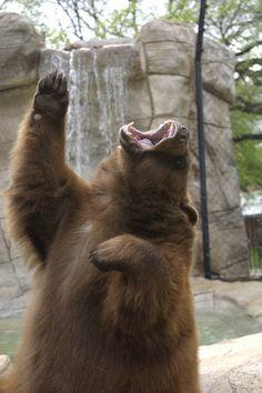 Sic 'Em Bears!