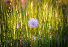 Blowing in the wind by Evangelos Roussos on 500px