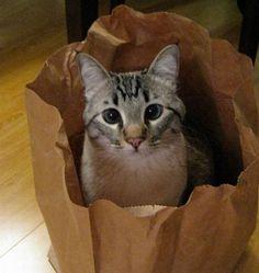 【画像】猫はやっぱりこういう場所が好きなんだなwwww : アルファルファモザイク