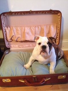 here is the start to my vintage suitcase dogbed...  i'm still going to do some things to it... but i love it, and so does Charlie!