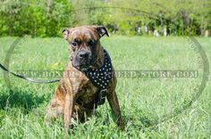 Professional #Leather #Boxer #Harness with  Cones $79.90