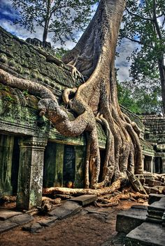 We've got to get Angkor Wat in here. Angkor Wat is a gigantic complex of 12th century temples in Cambodia. It's awe-inspiring and cool. But the question doesn't ask for awe-inspiring and cool, it asks for surreal. At Angkor Wat, the trees are surreal. The trees cling to the ruins.