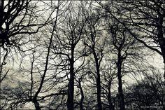 Ashridge woods., via Flickr. My photography. Photography Photos, Explore, Sunset, Softball, Woods, Fastpitch Softball, Woodland Forest, Sunsets, Forests