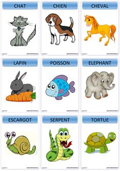 Une version du c?bre jeu Devine t?te sur le th?me des animaux. French Flashcards, French Worksheets, Learning French For Kids, Teaching French, French Language Lessons, French Lessons, French Kids, French Class, French Basics