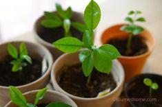 Green Party, Plantation, Agriculture, Kumquat, Gettysburg, Nature, New York, Blog, Garden