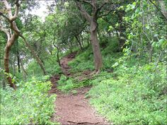 Nature walk in Munnar