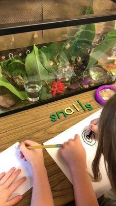 Kindergarten students observe snails in their class terrarium. Beginning Of Kindergarten, Kindergarten Math Activities, Kindergarten Science, Science Classroom, Science Curriculum, Science Area, Science For Toddlers, Spring Animals, Preschool Garden