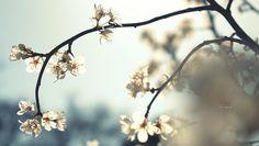 in bloom ...