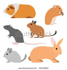 Cute rodents, vector pet isolated small domestic animals cartoon style. pet cavy, hamster, rat, degu, chinchilla, rabbit illustration. cartoon rodent pets. animal flat design. Cartoon animal art.