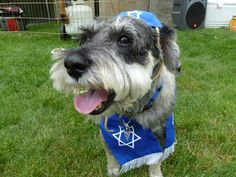 My Dog turned 13 so it only seemed appropriate to throw him a bark-mitzvah