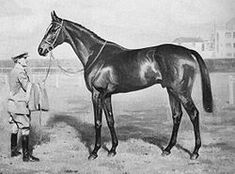 Bahram (1932–1956) Irish-bred, English-trained Thoroughbred racehorse. In a career which lasted from 1934 to1935 he was undefeated in 9 races. The leading British 2 year old of 1934,  he went on to take the Triple Crown in 1935 by winning the 2,000 Guineas Stakes, Epsom Derby & St. Leger Stakes. He was retired to stud at the end of the year. After a promising start to his stud career in Britain he was exported to the US, where he had moderate success before being exported again to Argentina.