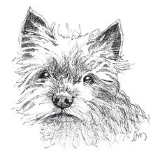I illustrate Pet Portraits in pen and ink - perfect for anyone who ever wanted an affordable drawing of their dog, cat or horse. Many people also like these as keepsakes to remember a special animal.
