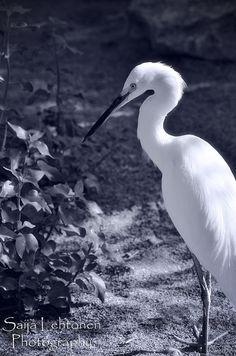 I've been called an ostrich, a giraffe , a daddy long leg spider, but I  think of myself as a graceful Egret!