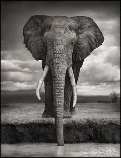 The elephant is the greatest creature on the planet.