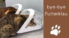 Coco und Nanju können endlich wieder gemeinsam Fressen ❤️ Bye Bye, Funny Cat Pics, Animales
