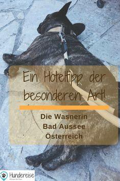 Sailing, Bad, Adventure, Dogs, Travel, Roadtrip, Dog Stuff, Hotels, Europe