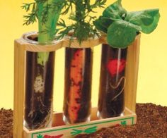 Science for Kids: Observing Plant Growth Using Bulbs ...