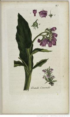 Flora Parisiensis ou Description et figures des plantes qui croissent aux environs de Paris. 2, T. second, 1777