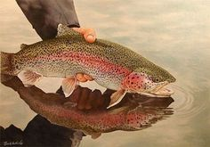 A beautiful painting of a Rainbow Trout by artist Bob White.